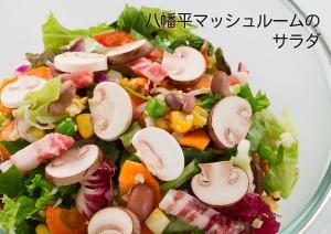 八幡平マッシュルームのサラダ